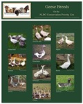 Heritage Geese