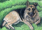 Hatcher Jack, the german shepherd