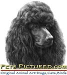Pets Pictured.com Promo