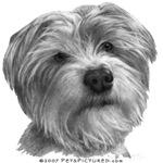 Biscuit, Shih Tzu-Terrier Mix