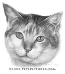 Mallory, Calico Cat