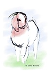 Boer Goat - Watercolor Doe