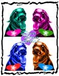 Colorful Labradors