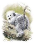 Old English Sheepdog Junior