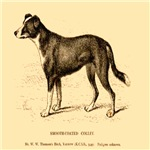 Smooth Coated Collie 1890 Digitally Remastered