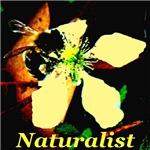 Naturalist: Honey Bee & Blackberry Flower