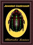 Jeweled Cockroach Blattodea luminus