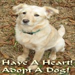 Have A Heart! Adopt A Dog!