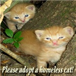 Please adopt a homeless cat!