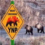 Bear Crossing YNP