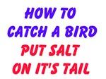 How to Catch a Bird Put Salt on its Tail