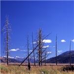 Yellowstone river flat