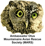 Ambassador Otus Close Up