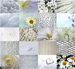 White Photography Collage