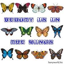 Beauty in the Wings