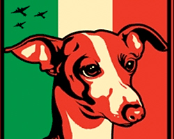 Italian Greyhound Dictator