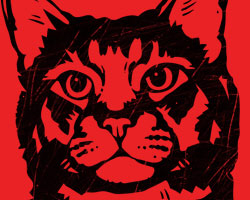 Viva la Kitty! Icon