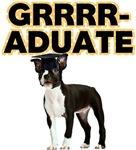 Graduation Boston Terrier