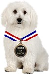 Best In Show Bichon Frise