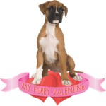 Boxer Valentine