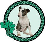 Irish Bull Terrier
