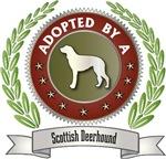 Adopted By Scottish Deerhound
