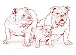Bulldog Family Red