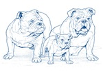 Bulldog Family Blue