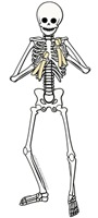 Skeleton (Rhythm) Bone player