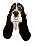 Basset Face and Monical