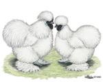 White Silkies