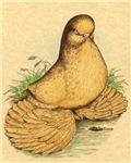 Muffed Tumbler Pigeon
