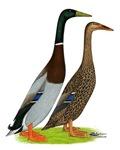 Runner Ducks Gray