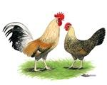 Norwegian Jaerhons Chickens
