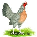 Fawn Gold DW Hen