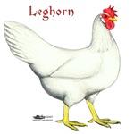 Leghorn White Hen
