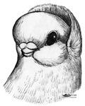 Royal Snow SF Pigeon