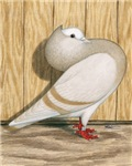Khaki Mookee Pigeon