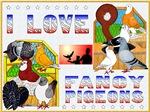 I Love Fancy Pigeons