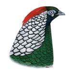 Lady Amherst Pheasant Head