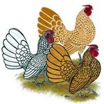 Sebright Rooster Assortment