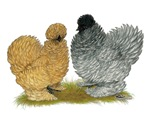 Sizzle Chickens