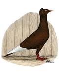 Flying Flight Red Pigeon