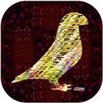 Golden Show Racer Pigeon