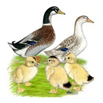 Appleyard Duck Family