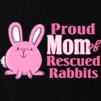 Bunny Rabbit T-Shirts & Collectibles
