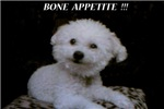FRISKIE HAPPY FACE 'I LOVE YOU' AND 'BONE APPETITE