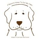 Chocolate Lab Needs A Home - LabMed