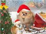 Pomeranian Holiday Fun