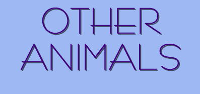 Other kinds of animals...